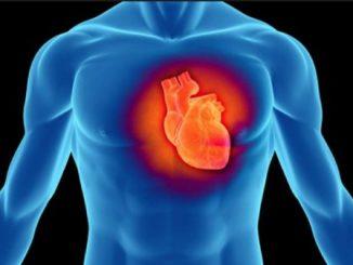 inima-in-interiorul-toracelui